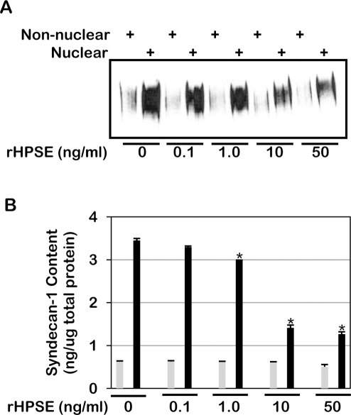 Exogenous recombinant heparanase (rHPSE) decreases nuclear syndecan-1 levels in a concentration-dependent manner.Recombinant heparanase was added to CAG cells having very low levels of heparanase expression (shRNA knockdown cells). Nuclear and non-nuclear fractions were prepared and syndecan-1 levels analyzed by A) western blotting and B) ELISA. Grey bars = non-nuclear fraction; Black bars = nuclear fraction. Error bars represent standard error of the mean. *, P<0.01 vs. nuclear syndecan-1 in cells treated with 0 ng/ml rHPSE.
