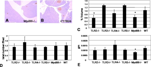 Histologic measurement of β-cell volume, mass and islet number for WT and TLR KO mice.A&B Representative histological sections from A) Myd88−/− and B) B6 mice. C. β-cell volume as a percentage of total pancreas volume. D. Islet cell number per histologic field examined. E. Total β-cell mass. The ages, body weights, and pancreatic weights of the mice used for these studies are shown in Table 1. * = p<0.05.