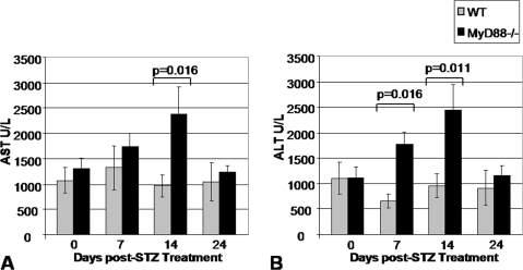 Transaminase Levels Following STZ Treatment.Data shown are for A. AST and B. ALT for 8 WT mice and 8 Myd88−/− mice who received low-dose STZ treatment for 4 days. The animals in this experiment were the same set of mice described in Figure 4 and data for the same time points 7, 14, and 24 days post completion of the low-dose STZ treatment course are shown.