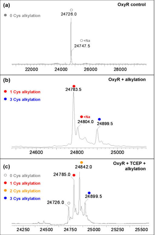 Cysteine Oxidation States of The Oxidation State of