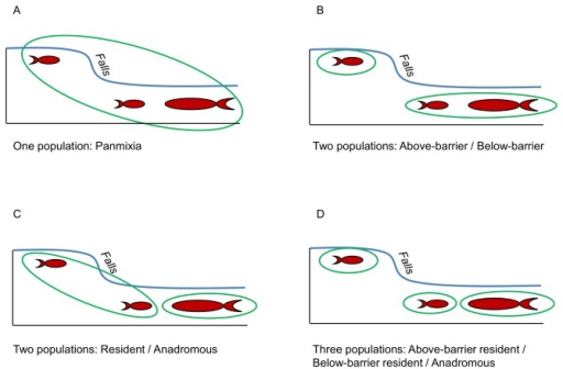 Pictorial representation of the hypothetical population structures tested for resident and anadromous O. mykiss samples.The small and large fish icons represent resident and anadromous O. mykiss, respectively, the falls represent a barrier to upstream migration, and the green ovals encompass the life-history type and location of fish considered as a single population for each scenario. For the Skokomish River, which does not contain a barrier to migration, only the one population, panmixia (A), and two population, resident / anadromous (C) scenarios were considered.
