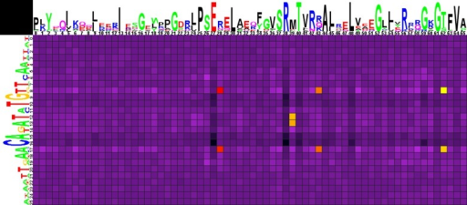 Heat map of correlations between amino acids and nucleotides for HutC-subfamily TFs and their binding sites.Notation as in Fig 1.