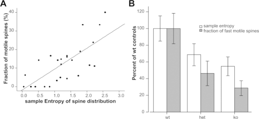The Sample entropy of the position of dendritic spines is an estimate of the spine motility.(A) the sample entropy of spine position shows a linear relationship with the percentage of motile spines in a dendrite (Pearson correlation = 0.728, n = 25 dendrites, p ≪ 0.01). Sample entropy is not correlated with the density of dendritic spines (Pearson correlation −0.298, p = 0.092) nor with the length of the measured dendrites (Pearson correlation = 0.062, p = 0.730). (B) It is possible to characterize the difference in percentage of motile spines among different transgenic animals using sample entropy of spine distribution on still images (no requirement of time-lapse data). Epac 2 ko mice have a lower number of motile spines (F(2.33) = 10.7, p ≪ 0.01) and, correspondingly, lower sample entropy (F(2,23) = 3.73, p = 0.04); data represent mean ± SEM; n = 8 dendrites from 3 wt animals, 13 dendrites from 3 het animals and 15 dendrites from 3 ko animals. To compare sample entropy and number of motile spines data have been represented as per cent of wild type animals.