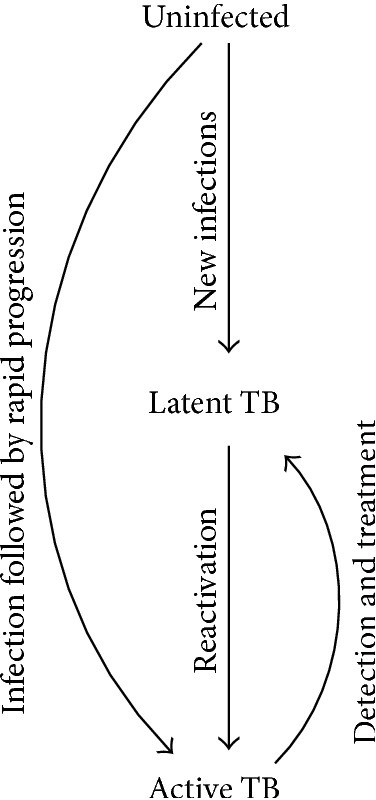 "A simple epidemiological model of TB. Uninfected individuals that are exposed to TB can become infected with TB, which can result in either a long-standing infection that is asymptomatic and noninfectious (latent TB) or progress at some point (""reactivation"") to a condition that is infectious and generally symptomatic (active TB). Detection and effective treatment can cure active TB. For simplicity, some other important features of natural history of TB are not shown here (but are generally included in compartmental models of TB), including reinfection, spontaneous resolution (""self-cure""), and mortality."