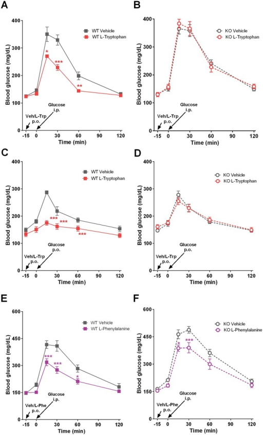Glucose tolerance tests after L-Tryptophan and L-Phenylalanine oral dosing in Gpr142KO mice and WT littermate controls.(A-D) Vehicle (15% HP-β-CD) or L-Trp (500 mg/kg), or (E-F) vehicle or L-Phe (500 mg/kg) was dosed orally at 20 ml/kg to 5hr daytime fasted mice 15 minutes prior to the glucose challenge. Glucose (2 g/kg) was injected i.p. (A-B, E-F) or given by oral gavage (C-D) at indicated time points. Tail blood glucose was monitored for 120 minutes after glucose injection. Animals used were male, 5–8 months of age, and maintained on standard chow diet. Data are mean ± SEM. N = 7 per group. *,**,***: p<0.05, 0.01, 0.001 treatment group vs. vehicle.