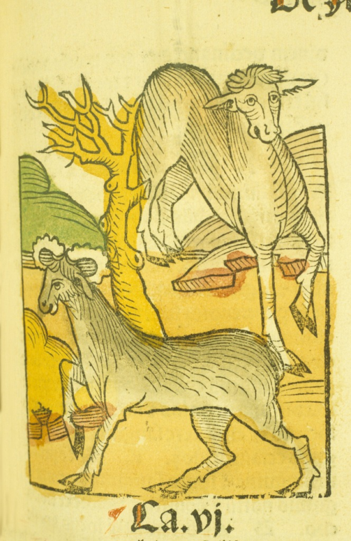 <p>Hand-colored woodcut of the elk, or moose.</p>