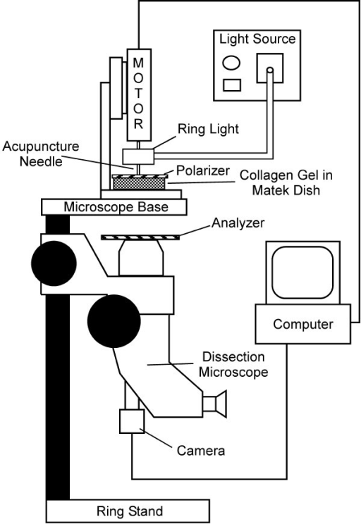 Schematic of polarized light microscopy system. A dissection stereomicroscope with a USB camera was mounted upside-down to a bench top. A fiber-optic ring light was attached to the motor housing providing a light source to the sample without hindrance from the motor. The polarizer was placed on top of the sample dish, and the analyzer was placed on the microscope as shown with the axis of polarization orthogonal to the axis for the polarizer. A small hole in the polarizer allowed free insertion and rotation of the acupuncture needle in the sample.