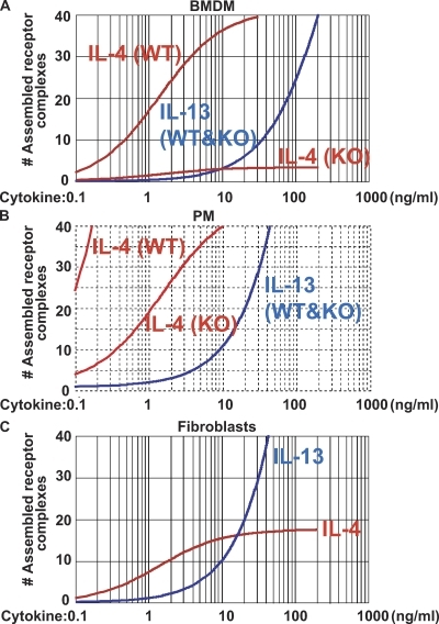 Estimation of the ability of IL-4 and -13 to assemble receptor complexes. (A) Calculated prediction of the capacity of IL-4 or -13 to assemble receptor complexes in BMDMs. The calculation takes into account three major parameters in receptor chain assemblage namely; the estimated receptor chain expression; the known primary binding efficiency of cytokine/cytokine binding receptor chain and the estimated secondary binding efficiency of cytokine/cytokine binding receptor to the second receptor chain (see text for detailed values). (B) Calculation for predicted assemblages of receptor complexes was performed as in Fig. 7 A, using 2.6-fold more IL-4Rα, 4-fold more γc, and 2.5-fold more IL-13Rα1, based on our results shown in Fig. 6. (C) In NIH3T3, expression of γc is very low or nonexisting (Fig. S3). The calculation was performed as above including only IL-4Rα and IL-13Rα1 expression in the analysis. Fig. S3 is available at http://www.jem.org/cgi/content/full/jem.20080452/DC1.