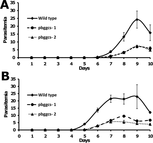 Proliferation of wild type and pbgccs− parasites in mice.The course of parasitemia was determined in groups of 5 mice infected with either 2×102 (A) or 2×103 (B) parasites and followed for 10 days. Each point represents the mean parasitemia. Bars represent standard errors of the mean.
