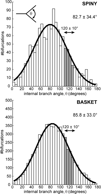 Axon branch points (bifurcations) are not generally Steiner points.Distribution of local internal (aperture) angles at neocortical axon arbor bifurcations did not match Steiner point angle condition of 120° (filled bars indicate ±10° range) for either spiny (upper, 12% within ±10° range from n = 1298 nodes) or basket cell classes (lower, 14% out of n = 6192 nodes). Inset (upper) shows schematically how internal branch angle measurements were made from axon arbor reconstructions. Best-fit Gaussian distributions are shown in thick black lines (spiny, μ = 80.3°, sd = 35.7°; basket, μ = 84.8°, sd = 34.5°).