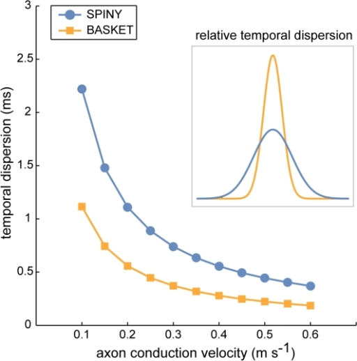 Temporal dispersion of basket cell axon latencies was approximately half that of spiny cell axons.Inset shows normalised Gaussian profiles of relative temporal dispersion independent of conduction velocity.