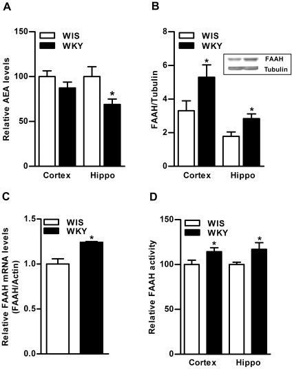 Basal differences in AEA and FAAH levels in the brain of WKY rats.The level of eCB, AEA was found to be significantly lower in hippocampus of WKY rats compared to WIS rats (31%, p<0.01; A). Conversely, the level of FAAH enzyme was significantly higher in frontal cortex (40%, p<0.05) and hippocampus (40%, p<0.05; B) of WKY rats. A representative immunoblot for hippocampus is provided in the upper panel (B). The qPCR analysis also indicated higher levels of mFAAH in hippocampus of WKY rats (24%, p<0.05; C). The qPCR data on FAAH, normalized to β-Actin (internal standard) is presented as the fold change relative to the control value of 1.0. The FAAH activity was slightly higher in frontal cortex (15%, p<0.05) and hippocampus (17%, p<0.05) of WKY rats compared to WIS rats (D). Hippo; Hippocampus.