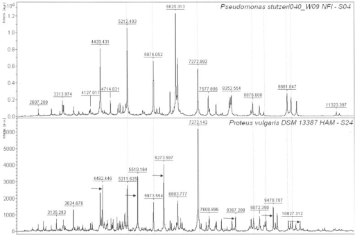 Comparison of Pseudomonas stutzeri and Proteus vulgaris MALDI-TOF mass spectra.Isolates S04, S24 and S38 were identified as P. stutzeri through 16S rRNA gene sequencing; however isolate S24 showed a different peak pattern and was identified as Proteus vulgaris by the Biotyper software. Examples of common peaks are indicated by vertical lines and unique peaks are indicated by the arrows.