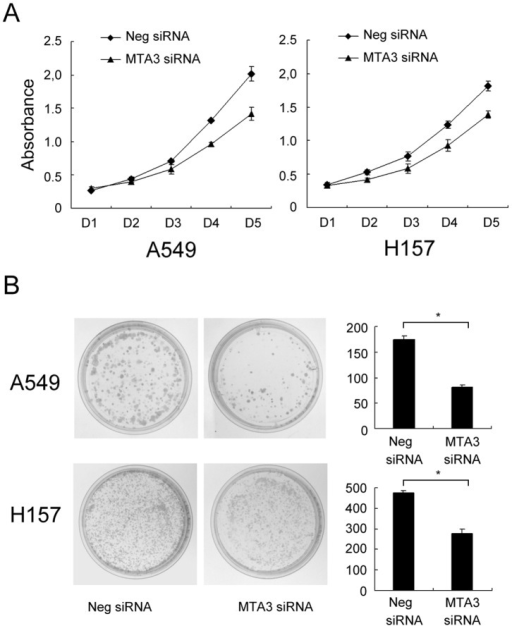 MTA3 depletion impaired cancer cell proliferation.A. CCK-8 assay was performed after MTA3 siRNA treatment. A reduction of absorbance was observed (p<0.05 at day 5 for both A549 and H157). B. Assessment of clonogenic potentials of the MTA3-depleted cancer cells. Numbers of colonies were counted. The number of colonies formed by cells treated with MTA3 siRNA was far less than that of control cells (p<0.05). Columns, mean; bars, SD. *p<0.05.