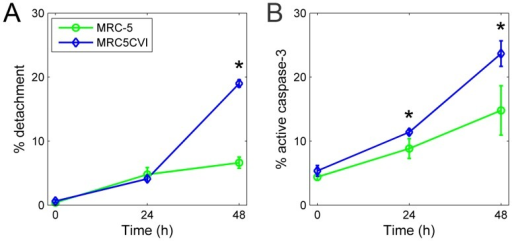 Examination of cell death after UVB irradiation by percent detachment and active caspase-3 staining.Panel (A), results of percent detachment; panel (B), results of active caspase-3 staining. Pairwise statistical comparisons between the time point of two cell types were performed using Student's t test (*, P<0.05). Error bars show the standard deviation (n = 3).