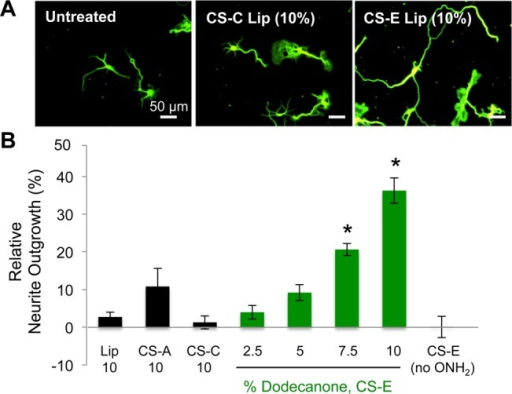 Presentation of CS-E polysaccharides on neuronal cellsurfacesstimulates neurite outgrowth. (A) Representative images and (B) quantificationof neurite outgrowth for neurons treated with unmodified liposomesor liposomes displaying CS-A-, CS-C-, or CS-E-enriched polysaccharides.Neurite outgrowth was normalized and plotted relative to untreatedneurons. Data represent mean ± SEM (*P <0.05) from at least three experiments. See SI for details.