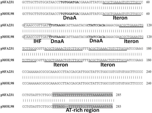 Alignment of the pSFA231 replicative origin region with the putative oriV regions of pMOL98. DnaA refers to DnaA boxes, IHF refers to putative Integration Host Factor binding sites.