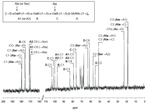 13C NMR of Vibrio alginolyticus exopolysaccharide recorded at 353 K. Inset: chemical structure of the polysaccharide.