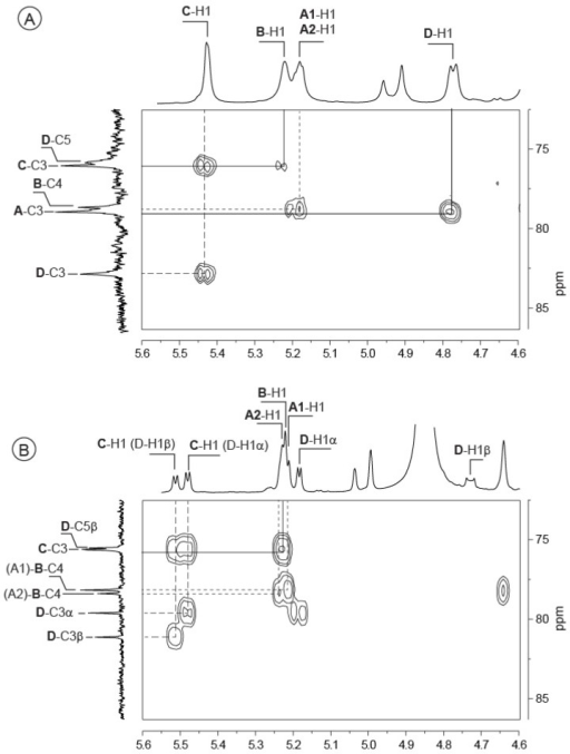 1H-13C Heteronuclear chemical shift correlated spectrum (HMBC) of the Vibrio alginolyticus exopolysaccharide (A) and its oligosaccharides: DP4 (B) and DP8 (C). Correlations demonstrating the linkages between residues in the repetition moieties are indicated.