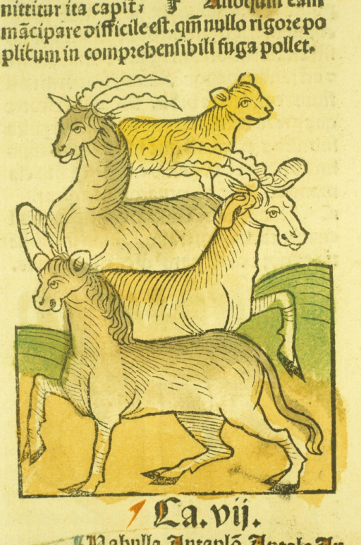 <p>Hand-colored woodcut of the four animals.</p>