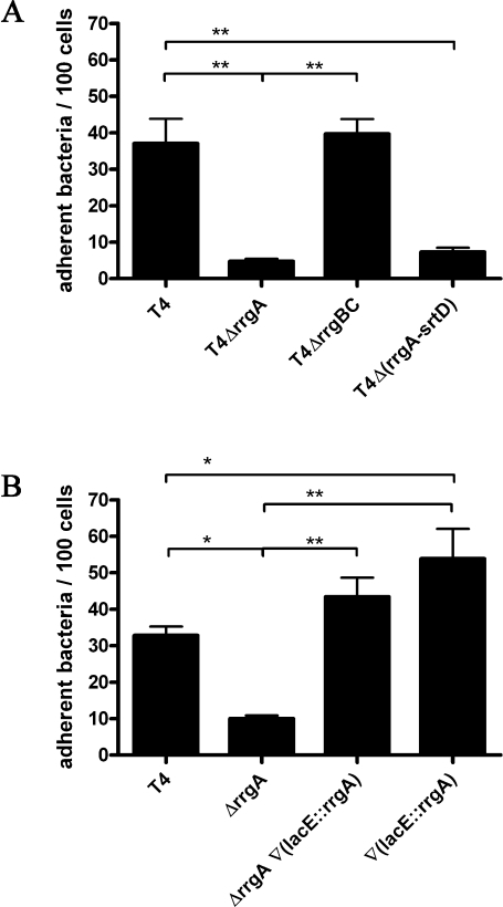Expression of rrgA confers pilus-mediated adherence to human respiratory epithelial cells. A. rrgA, but not rrgB and rrgC, is necessary for pilus-mediated adherence to epithelial cells. Adherence of wild-type piliated TIGR4 ('T4') to A549 human respiratory epithelial cells was significantly greater than both non-piliated T4Δ(rrgA-srtD) compared with T4 deficient in the rrgA gene ('T4ΔrrgA'). Adherence of T4 deficient in both rrgB and rrgC ('T4ΔrrgBC') was not notably different from wild-type organisms, but was significantly greater compared with T4ΔrrgA. Repeated-measure anova of data collected from three independent determinations indicates statistically significant differences within experimental conditions. Post hoc Bonferroni analyses identify specific significant differences: **P< 0.01. B. rrgA expression determines adherence to epithelial cells. T4 deficient in rrgA are significantly deficient in adherence ('ΔrrgA'), compared with wild-type (T4), while trans-complementation restores wild-type adherence ['ΔrrgA∇(lacE::rrgA')]. Introduction of a second copy of rrgA inserted in trans in the lacE locus ['∇(lacE::rrgA'] results in significant enhancement of adherence over wild-type levels. Statistical analyses were performed with repeated-measure anova of data collected from three independent determinations. Post hoc Bonferroni analyses identify specific significant differences: *P< 0.01 and **P< 0.001.