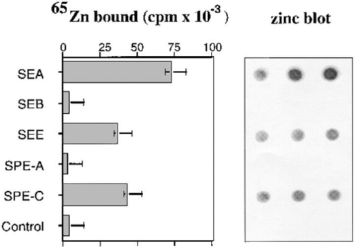 65Zn binding to  SPE-C. Recombinant toxins  were incubated with 100 μM  65Zn and blotted in triplicate to  nitrocellulose. After washing, the  strips were autoradiographed and  the individual dots counted.