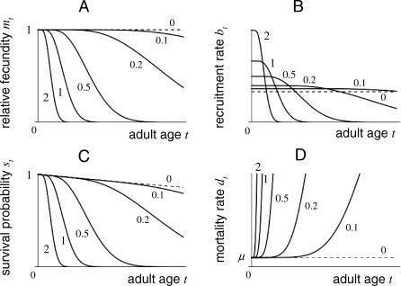 Graphs of Vital Rates(A) Relative fecundity functions mt(x) taking the form of Equation 15a at age t for x = 0, 0.1, 0.2, 0.5, 1, and 2, as indicated.(B) Total adult recruitment functions bt(x) = b0(x)mt(x), with b0(x) = 1 + x.(C) Survival functions st(x) taking the form of Equation 15b.(D) Mortality rate functions derived from Equation 15b. The senescence rate is of the age-dependent form , with n = 5 (further detailed in Appendix A of Text S1). Other parameters are αb = αd = 0.5 and μ = 0.01. All graphs are on the same timescale.