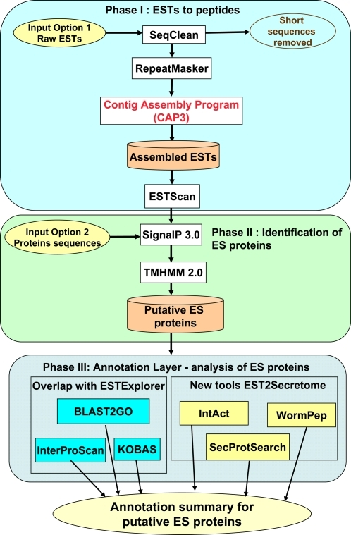 Schematic representation of EST2Secretome workflow.EST2Secretome analysis comprising Phase I: pre-processing, assembly and conceptual translation, Phase II: identification of putative excretory-secretory (ES) proteins and Phase III: annotation of ES proteins using a suite of computational tools.