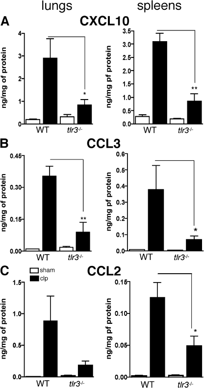 TLR3 amplified systemic inflammatory responses and secondary tissue injury after septic peritonitis. (A–C) At 24 h after sham and CLP surgeries, chemokines were measured in lung and spleen homogenates using ELISA. Data are means ± SEM from two independent experiments (n = 4–5 mice per experiment). *, P < 0.05; and **, P < 0.01 compared with WT groups.