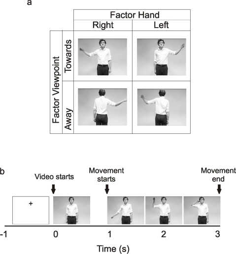 Experimental design.Figure 4a stills from the videos of experiment 2 showing the 2×2 factorial design collapsed across the factors goal. The factors depicted here are hand moved and the viewpoint. Figure 4b shows the time course of a typical trial.