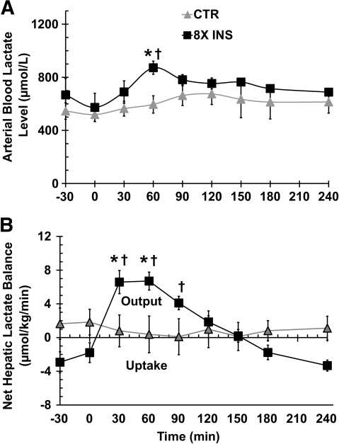 Arterial blood lactate concentrations (A) and net hepatic lactate uptake (B) in 24 h fasted conscious dogs during the basal (−30 to 0 min) and experimental (0–240 min) periods. Data are means ± SEM; n = 7 in control (CTR) and n = 20 in 8× insulin (8X INS) groups. *P < 0.05 vs. CTR group; †P < 0.05 vs. basal period.