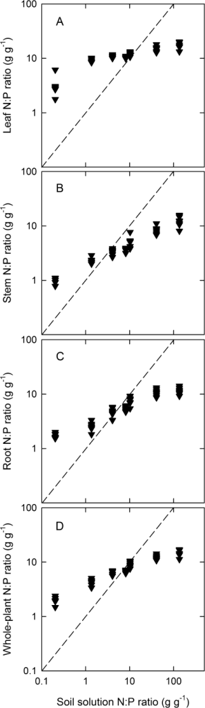The nitrogen to phosphorus ratio of leaves (A), stems (B), roots (C), and whole plants (D) of Ficus insipida plotted as functions of the nitrogen to phosphorus ratio of the nutrient solutions fed to the plants. Both the x-axis and y-axis are shown on logarithmic scales. The dashed lines represent one-to-one lines.