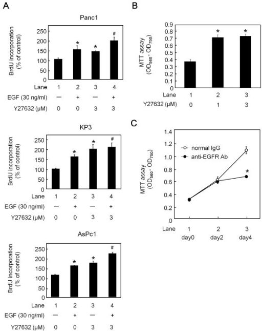 The effects of Y27632 and EGF on pancreatic cancer cell proliferation. (A) Panc1, KP3 and AsPc1 cells were pretreated with 3 μM Y27632 or vehicle in RPMI containing 0.3% FCS for 1 h, and then stimulated with 30 ng/ml of EGF or vehicle for 24 h. The BrdU incorporation as the % of the control (lane 1) is shown. (B) Panc1 cells were treated with the indicated doses of Y27632 or vehicle in RPMI containing 3% FCS for 48 h, and the cell viability assay was performed using the MTT cell proliferation kit I. (C) The attached cells were treated with 0.5 μg/ml of normal mouse-IgG (open circle) or anti-EGFR-neutralizing antibodies (closed circle) for the indicated periods in medium containing 3% FCS, and the surviving cells were counted using the MTT cell proliferation kit I. The results are expressed as the absorbance (OD 560 nm-OD 750 nm). All assays were done in triplicate. (*) indicates a significant difference (p < 0.05) compared with lane 1, (#) indicates a significant difference (p < 0.05), compared with lane 2.