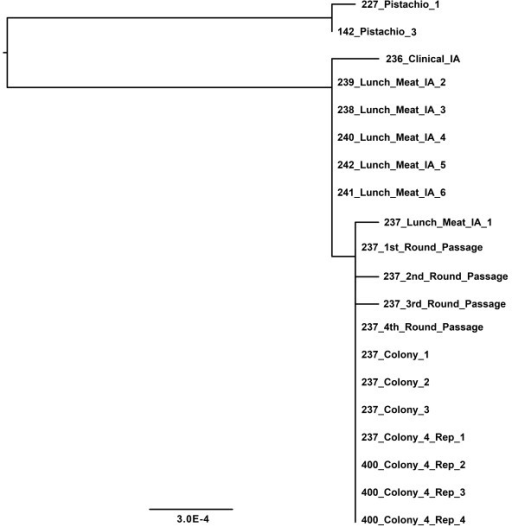 Phylogenetic GARLI tree from resequencing of matching human-food isolate pairs, individual colonies, and sub-passages of a single strain of S. Montevideo. Terminal names, scale bar, and branch lengths are as in Figure 1. The tree was rooted with two outgroup isolates, both of which were obtained from Pistachio. The laboratory-generated isolates were indistinguishable in a phylogenetic analysis with all replicates clustering together. Some of the biological, laboratory, or technical replicate genomes yielded nucleotide differences and these are seen as longer terminal branches for several isolates on the tree. These few changes did not alter relatedness or inclusivity/exclusivity among the matching food/human isolates.
