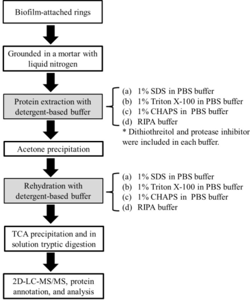 Schematic Workflow For Protein Extraction From Biofilms Open I