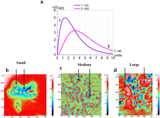 "Kinetics of formation and development of topologic defects.(a) Theoretical curves of dependences of the number of small defects (""grains"") on time n(t) and of the number of medium defects (merged ""grains"") on time N (t). (b–d) - AFM 2D- image of membrane surface: small – separate ""grains"" in domains (b), medium – merged ""grains"" in domains (c), large – merging of domains. (d). Values t, n(t) and N(t) are in relative units."