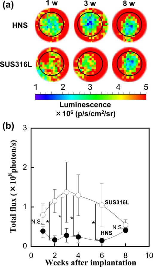 NF-κB-dependent bioluminescence in living mice implanted with HNS and SUS316L. (a) Diagrams show the bioluminescent signal within 10 mm of the implanted region. The color overlay on the image represents the photons/s emitted from the animal, as indicated by the color scales. The metals embedding part are surrounded by a dotted line. (b) Quantitative analysis of inflammation of HNS (•) and SUS316L (○) after implantation for various days. Data are the average ± SD of five samples, with (&) indicating p < 0.05. N.S. means no significant difference.