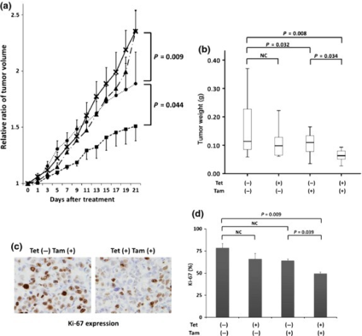 Tamoxifen treatment effectively inhibits tumor progression with B-cell translocation gene 2 (BTG2) expression. (a) MCF7-RASV12/tet-BTG2 cells were inoculated into the mammary fat pad of 6-week-old female BALB/c nude mice. After the tumors grew to a volume of more than 125 mm3, mice harboring these tumors were administered water containing tetracycline (Tet) and/or tamoxifen (Tam) pellets for 3 weeks. Tumor growth ratios were measured in all four groups ([×]: Tet(−)Tam(−), n = 11; [▴]: Tet(+)Tam(−), n = 10; [•]: Tet(−)Tam(+), n = 11; [▀]: Tet(+)Tam(+), n = 8). Data are shown as averages ± SE. Tumor growth ratio was significantly suppressed with the concomitant administration of tetracycline and tamoxifen in comparison with the animals treated with tamoxifen alone (P = 0.044, Tet[−]Tam[+] vs Tet[+]Tam[+]; Student's t-test). (b) Tumors were harvested at 21 days after treatment to be weighed. Tumor weight was also significantly suppressed with the concomitant administration of tetracycline and tamoxifen in comparison with the animals treated with tamoxifen alone (P = 0.034, Tet[-]Tam[+] vs Tet[+]Tam[+]; Student's t-test). (c) Immunohistochemistry of Ki-67 in tumor samples from Tet(−)Tam(+) and Tet(+)Tam(+) mice. (d) The number of portions stained by Ki-67. The Ki-67 ratios were significantly different between Tet(−)Tam(+) and Tet(+)Tam(+) mice (P = 0.039; Student's t-test). The average number of stains was counted by studying three portions in each slide.