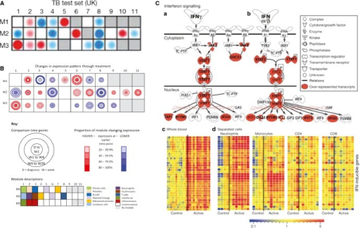 Modular and pathway analysis reveal a dominant IFN-inducible signature in tuberculosis. Modular analysis reveals overabundance of IFN-inducible genes (M3.1) and myeloid genes (M1.5 and M2.6) and under abundance of B (M1.3) and T cell (M2.8) related genes (A) (4); (B) (From Cliff et al., Distinct phases of blood gene expression pattern through tuberculosis treatment reflect modulation of the humoral immune response. J Infect Dis 2013; 207(1): pp. 18–29, by permission of Oxford University Press). (12). (C) The canonical pathway for IFN signaling from Ingenuity Pathways Analysis; with transcripts over-represented in test set patients with active tuberculosis (1, 4) shaded red. GAS, Gamma-activated site; ISRE, IFN-sensitive element. Modified from (1, 4). Transcript abundance in whole blood and (c) separated blood leucocyte populations of representative IFN-inducible genes (from top to bottom: OAS1, IFI6, IFI44, IFI44L, OAS3, IRF7,IFIH1, IFI16, IFIT3, IFIT2, OAS2, IFITM3, IFITM1, GBP1, GBP5, STAT1, GBP2, TAP1, STAT1, STAT2, IFI35, TAP2, CD274, SOCS1, CXCL10, IFIT5) in active tuberculosis. Transcript abundance/expression is normalized to the median of the healthy controls. Modified from (A and C modified from Berry et al., Nature 2010) (1, 3, 4).