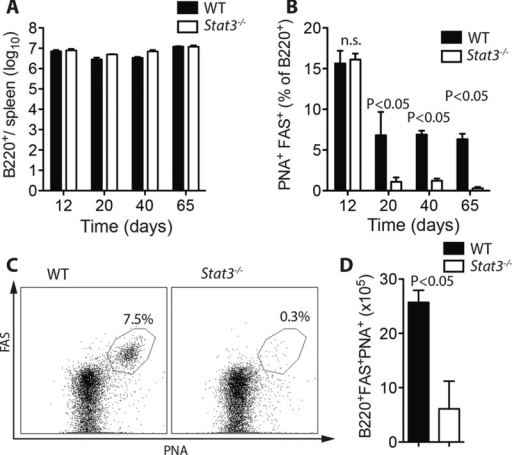T-Cell STAT3 is required for the maintenance of germinal center B-cell reactions toward LCMV. (A–D) Lck-Cre−Stat3fl/fl vs. Lck-Cre+Stat3fl/fl mice were infected with 2 × 103 PFU LCMV-Docile. (A) Total quantity of (B220+) B cells in the spleen on days 12, 20, 40, and 65 postinfection was measured by flow cytometry (mean ± SEM; n = 4–7 mice/group). (B–D) GC B cells (B220+PNA+FAS+) were measured on days 12, 20, 40, and 65 postinfection (n = 4–7 mice/group). (B) Quantity of B220+PNA+FAS+ cells as a percent of total B cells (B220+) at each time point (mean ± SEM), (C) representative dot plot from day 65 (gated on B220+ cells), and (D) numerical quantification of B220+PNA+FAS+ cells in each group at day 65 (mean ± SEM). Data are pooled from —one or two independent experiments per time point. Statistical significance between groups was determined by Student's t-test.