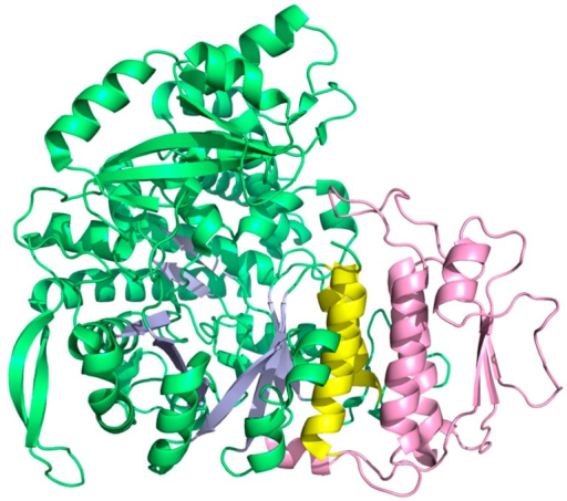 Structure of the monomeric class II RNR from L. leichmannii (PDB: 1L1L [39]). Helices A and B are yellow and the dimer-mimicking insertion is pink.
