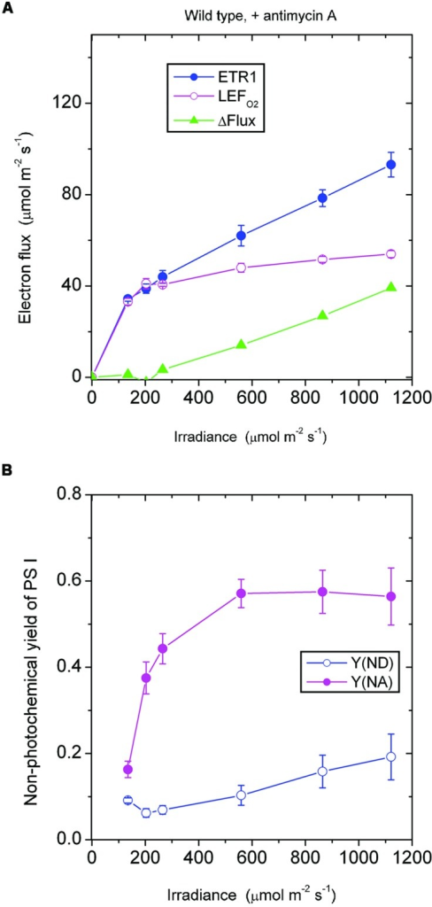 Response of steady-state ETR1, LEFO2 and ΔFlux (A), and Y(ND) and Y(NA) (B) in wild-type leaf disks to irradiance in the presence of antimycin A. Values are means ± SE. (n = leaf disks). Other conditions are as in Figure 1.