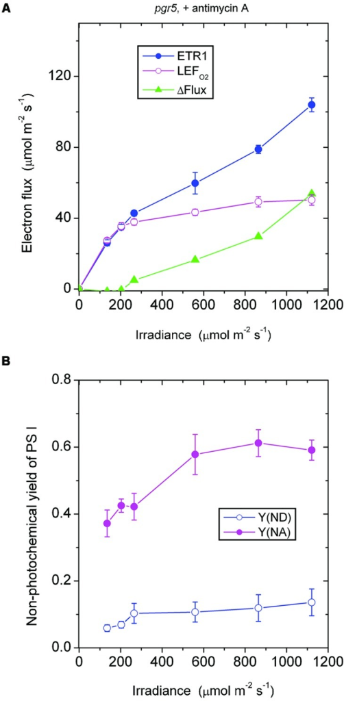 Response of steady-state ETR1, LEFO2, and ΔFlux (A), and Y(ND) and Y(NA) (B) in leaf disks of the pgr5 mutant to irradiance in the presence of antimycin A. Values are means ± SE. (n = 7 leaf disks). Other conditions are as in Figure 1.