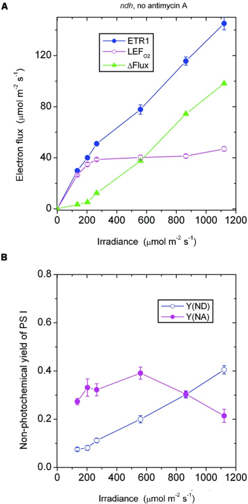 Response of steady-state ETR1, LEFO2, and ΔFlux (A), and Y(ND) and Y(NA) (B) in leaf disks of the ndh mutant to irradiance in the absence of antimycin A. Values are means ± SE. (n = 4 leaf disks). Other conditions are as in Figure 1.