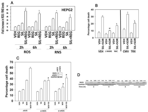 The generation of ROS/RNS following regorafenib and sildenafil treatment is a key mediator of tumor cell killing. (A) HEPG2 cells in 96-well plates were loaded for 30 min with either dihydro-DCF (10 μM) which is sensitive to oxidation by hydroxyl radicals and peroxynitrite directly and hydrogen peroxide (i.e., reactive oxygen species, ROS); or 3-amino,4-aminomethyl-2′,7′-difluorescein (DAF-FM DA, 4 μM) which is sensitive to oxidation by NO (i.e., reactive nitrogen species, RNS). Cells were treated with vehicle (DMSO), regorafenib (1 μM), sildenafil (2 μM); or the drugs in combination. Cells—ROS/RNS measurements—were made in a Vector 3 plate reader at the indicated times after drug treatment (n = 3, ±SEM). *P 0.05 < greater than vehicle control. (B) Left portion of the graph: HEPG2 cells were pre-treated with vehicle, the NOS inhibitor L-NAME (1 μM) or the ROS quenching agent N-acetyl cysteine (10 mM). Cells were then treated with vehicle or with sildenafil (2 μM), and sorafenib (2 μM) in combination. Twenty-four hours after treatment cells were isolated and viability determined by trypan blue (n = 3, ±SEM). Right portion of the graph: HEPG2 cells were transfected with either an empty vector plasmid (CMV) or a plasmid to express thioredoxin (TRX). Twenty-four hours after transfection cells were treated with vehicle or with sildenafil (2 μM), and sorafenib (2 μM) in combination. Twenty-four hours after treatment cells were isolated and viability determined by trypan blue (n = 3, ±SEM). #P < 0.05 less than corresponding value in VEH/CMV cells; ##P < 0.05 less than corresponding value in NAC cells. (C) HEPG2 cells were transfected with a control scrambled siRNA (siSCR) or siRNA molecules to knock down expression of eNOS or iNOS. Thirty six hours after transfection cells were treated with vehicle or with sildenafil (2 μM), and sorafenib (2 μM) in combination. Twenty-four hours after treatment cells were isolated and viability determined by trypan blue (n = 3, ±SEM). #P < 0.05 less than corresponding value in siSCR cells. (D) HEPG2 cells were treated with vehicle or with sildenafil (2 μM), and/or sorafenib (2 μM) in combination. Cells were isolated at the indicated time points and western immunoblotting performed to determine the expression of iNOS.