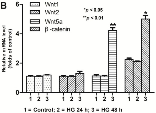 Activation of the Wnt/β-catenin pathway induced by high glucose in podocytes Podocytes incubated with HG for 24 and 48 h, respectively. (A) Reverse transcription-PCR (RT-PCR) demonstrating an non-altered expression of Wnt1 and Wnt2 and an increased expression of Wnt5a and β-catenin compared to control; (B) corresponding statistic histogram of Wnt1, Wnt2, Wnt5a and β-catenin. Data representative of three independent experiments. * p < 0.05, ** p < 0.01 compared to control group and HG 24 h group respectively.