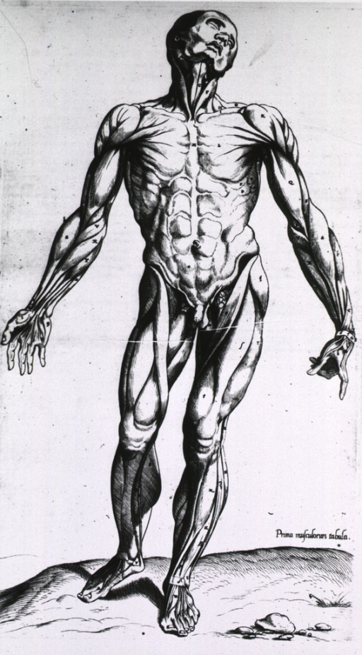 <p>Full length frontal view, standing, of male figure with musculature defined.</p>