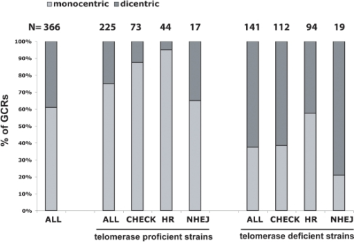 HR defects are associated with decreased frequencies of predicted dicentric GCRs.A total of 366 events were analyzed including 225 predicted monocentric GCRs (de novo telomere addition GCRs where excluded from this analysis) and 141 predicted dicentric GCRs; these GCRs are described in [30]. The percentage of predicted monocentric GCRs and dicentric GCRs were determined for each indicated group of strains. Telomerase deficient includes all strains that contain tlc1 or est2 mutations. CHEK includes strains that contain chk1, dun1, mec1, mec3, pds1, rad9, rad53 and/or tel1 mutations, REC includes strains that contain rad51, rad52, rad54, rad55, rad59 and/or rdh54 mutations and NHEJ includes strains that contain lig4, ku70, ku80 or mre11 mutations. Strains containing other mutations that might affect these different pathways were not included in this analysis. Numbers above the histogram indicate the actual number of GCRs in each group.