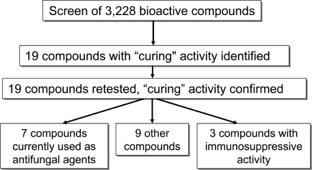 "Flow chart representing the C. elegans ""curing"" assay that identified 19 effective compounds."
