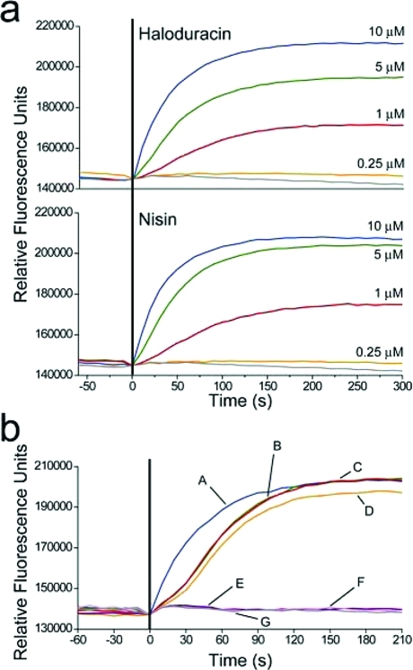 Potassium ion release from Micrococcus luteus cells induced by haloduracin and nisin. (a) Reponses to 10 (blue), 5 (green), 1 (red), 0.25 (orange), and 0 μM (gray) haloduracin or nisin. (b) The effects on potassium release by preincubating either Halα or Halβ prior to addition of its counterpeptide: (A, blue) 5 μM Halα preincubation followed by 5 μM Halβ addition; (B, green) 5 μM Halβ preincubation followed by 5 μM Halα addition; (C, red) simultaneous addition of 5 μM Halα and 5 μM Halβ; (D, orange) addition of 5 μM nisin; (E, violet) addition of 5 μM Halα; (F, pink) addition of 5 μM Halβ; and (G, gray) a control without haloduracin. Vertical line (black) indicates time of antibiotic addition.